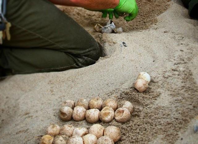 Outer Banks News | Island Free Press