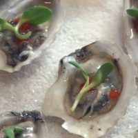 oysters-on-ice-e1495737508834