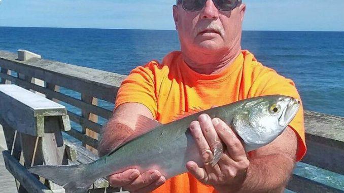 Donnie-Cummings-Big-bluefish-Jennettes-1