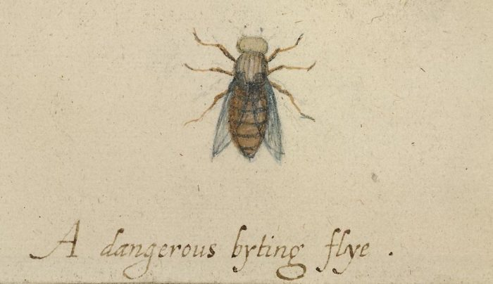 9.-A-dangerous-byting-flye