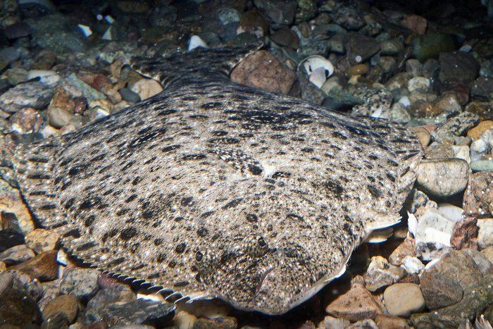 summer_flounder_0570-2048x1365